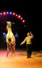 Cirque Maximum, France 2011 (dirkjanranzijn) Tags: show