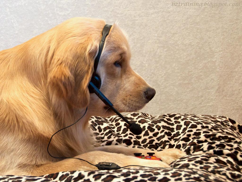 Gamer Pup