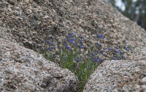 granite-flowers