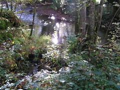 L'Arnon dans la valle des fougres - Sidiailles - Berry - Centre - France (vanaspati1) Tags: france la berry centre des dans fougres valle larnon sidiailles