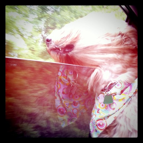 Vera riding in the car :)