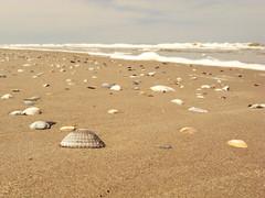 Shell (Jos Mecklenfeld) Tags: sea summer beach nature strand landscape island wadden waddeneiland shell noordzee natuur zee northsea zomer seashell ricoh friesland schelpen schiermonnikoog landschap eiland golven weaves gx200 ricohgx200