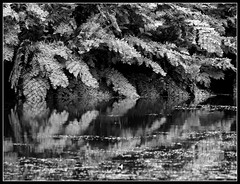 Cornish reflection (philwirks) Tags: new bw public interesting cornwall random picnik myfavs philrichards show08