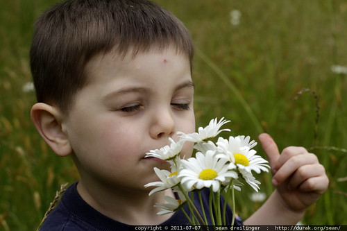 smelling the daisies - MG 5182.JPG