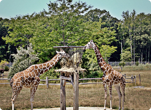 Cape May Zoo 12