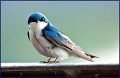 Are we done yet? (MurrayH77) Tags: birds wildlife pa heinz sop tinicum nwr wow1 wow2 wow3 goldwildlife mygearandme mygearandmepremium mygearandmebronze mygearandmesilver jheinznwr