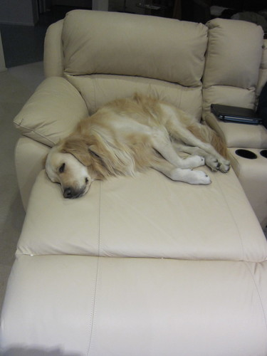 Bailey loves the new lounge