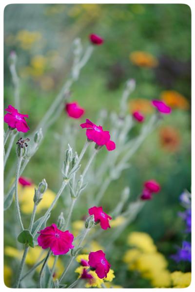 Flower-medley