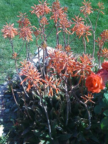 Las vegas garden  by lvonestopshop