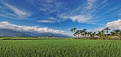 Memories of Hualien, Taiwan (williamcho) Tags: county copyright tourism landscape ngc taiwan retreat ricefields hualien attraction allrightsreserved bicycletour onassignment fujis5pro flickraward naturewatcher flickrestrellas topazlab williamcho