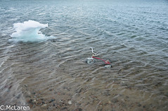 Sad Tricycle in the ocean.  Pond Inlet, Baffin Island Nunavut (ruminate) Tags: ocean canada ice water tricycle arctic nunavut thenorth baffinisland 2011 pondinlet canadianarctic june2011 summer2011 pondinletnunavut