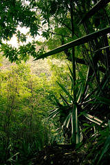 Nature verte (yanfolio) Tags: verde nature island vert runion sud choka entredeux brasdepontho