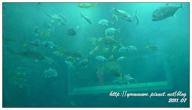 110711小丑魚主題館 (22)