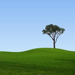 [フリー画像] 自然・風景, 樹木, 丘, 201107221900