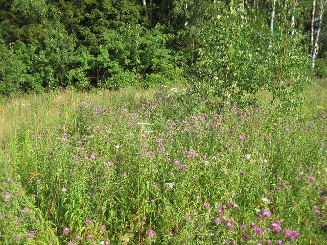 Цветущие растения - там много бабочек