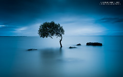 My Moodyness (Lockie Cooke) Tags: ocean longexposure morning tree water sunrise canon dark bay rocks mood australia brisbane zen queensland 1740mm calmness happyness moretonbay moodyness 5dmkii lockiecooke