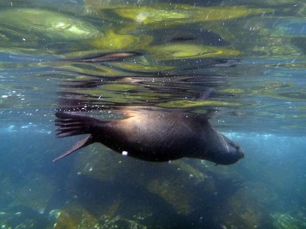 RYALE_Galapagos_Underwater-10
