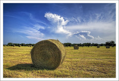 Newborns (ioensis) Tags: county field clouds rural farm july missouri callaway hay bales newborns 2011 ioensis 454516740673sfull