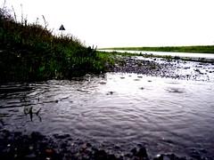 Wenn es regnet ... (Cherry Coke 90) Tags: wet rain weather wasser waterdrops regen wetter tropfen nass regentropfen pftze ennepetal
