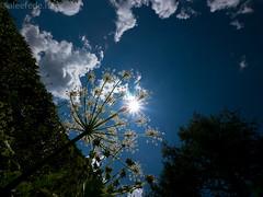 Controluce (aleefede) Tags: blu cielo sole svizzera alpi controluce raggi tmb gh2 lumix714 resistenzaalflare