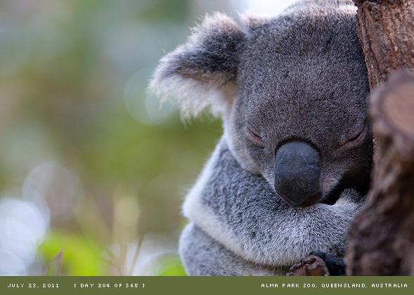 Alma Park Zoo, Queensland, Australia