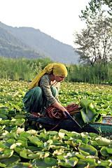 Green lady (Saniyia Kraipak) Tags: lake mountains green water lady canon boat lily lotus dal kashmir
