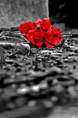 Il buio che non ti aspetti di Paolo Savini more info on http://www.teatron20.net (teatron20) Tags: roses black france flower cemetery contrast dead rouge death sadness souvenirs noir sad paolo top mort milano religion suicide best il triste contraste che non ti seller cimetiere tristesse vie redroses buio tombe prelachaise cimetire savini feltrinelli concorso caso deprime letterario suicid classifiche aspetti espoire teatron20 ilmiolibroit ilmioesordioit