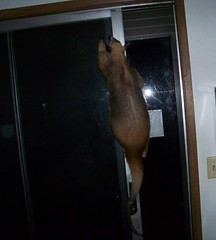 Aurora climbing the door