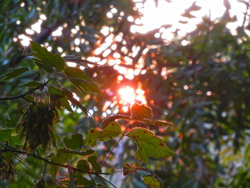 Sunset _ 4176