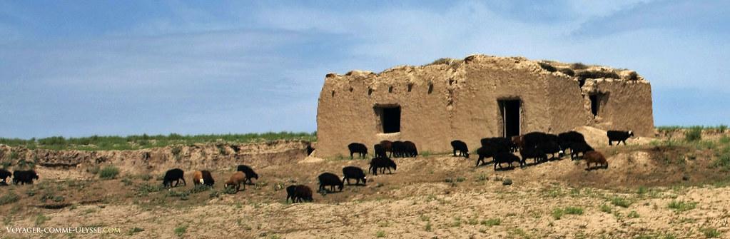 Vieille maison de berger