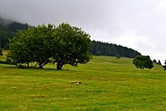three trees (Giulia van Pelt) Tags: trees italy mountain verde green nature alberi clouds landscape three italia nuvole cloudy lawn natura monte tre prato montagna paesaggio nuvoloso viote bondone viotte