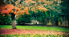autumn (Maria L10) Tags: morning trees summer plants plant motion tree nature weather clouds rural sunrise season landscape dawn landscapes countryside spain europe seasons wind air hill fast paisaje spinning environment sum
