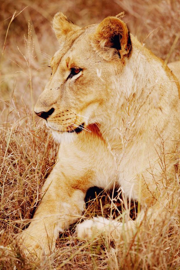 Safari 28