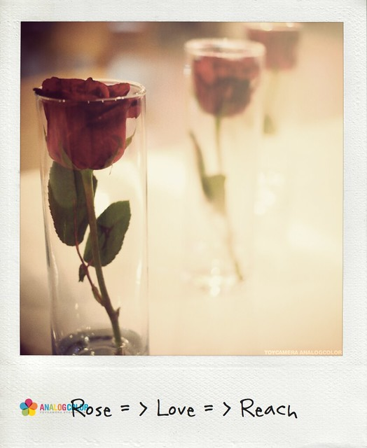 Rose Love Reach