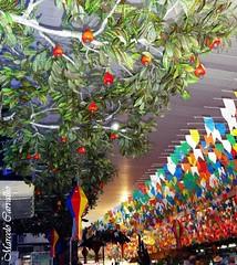 Festa junina ou melhor, julina (FM Carvalho) Tags: brazil rio brasil riodejaneiro de sony centro balo cybershot feira dos sonycybershot brsil cajueiro festajunina festajulina feiradosparabas parabas tradies nordestinas bandeirinha centrodetradiesnordestinas bandeirinhasdefestajunina hx5v sonyhx5v