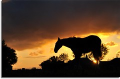 Sleeping Horse....a Horse with no Name.... (powerfocusfotografie) Tags: light sunset sky horse holland colors silhouette backlight clouds contraluz evening mood colours may groningen henk 2011 nikond90 100commentgroup powerfocusfotografie mygearandme