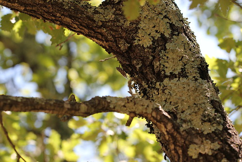 can you spot the two cicadas ?