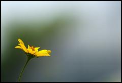 Flower Power (Andy Marfia) Tags: wild chicago flower iso200 conservatory garfieldpark 70300mm f8 garfieldparkconservatory 1800sec d7000