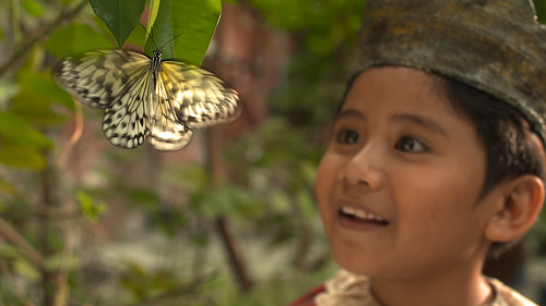 Antony & butterfly