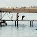 Saltos ornamentais num pier em Aqaba