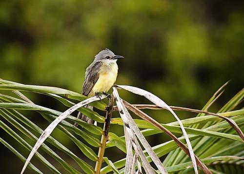 Monterrico Birds - Fauna by Vilma Salazar