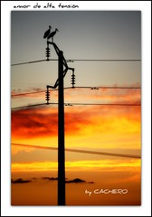 amor de alta tensión (marioadaja) Tags: love atardecer amor cables dos cielo electricidad tension naranjas cigüeñas rojos ltytr2 ltytr1 ltytr3 cachero