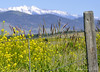 Mission Mountain Wire Fence (Explored) (misst.shs) Tags: summer grass fence nikon montana post barbedwire wildflowers friday hwy2 hff snowcappedpeaks d90 missionmountains paololivornosfriends ~~fencefriday~~