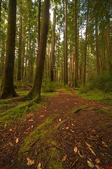In the Woods (gordeau) Tags: california trees red forest woods gordon redwoods ashby unanimous intheforest flickrchallengegroup flickrchallengewinner thechallengefactory gordeau