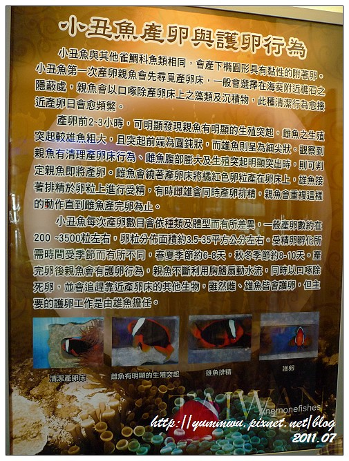 110711小丑魚主題館 (17)