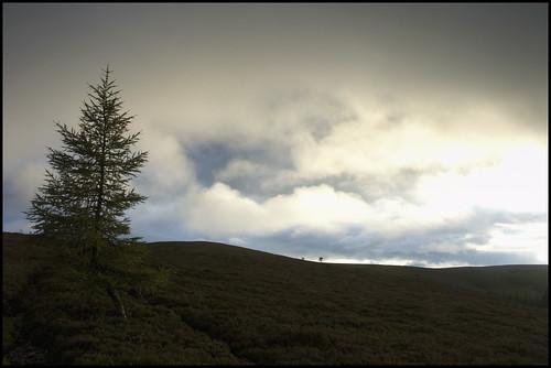 Open Hillside