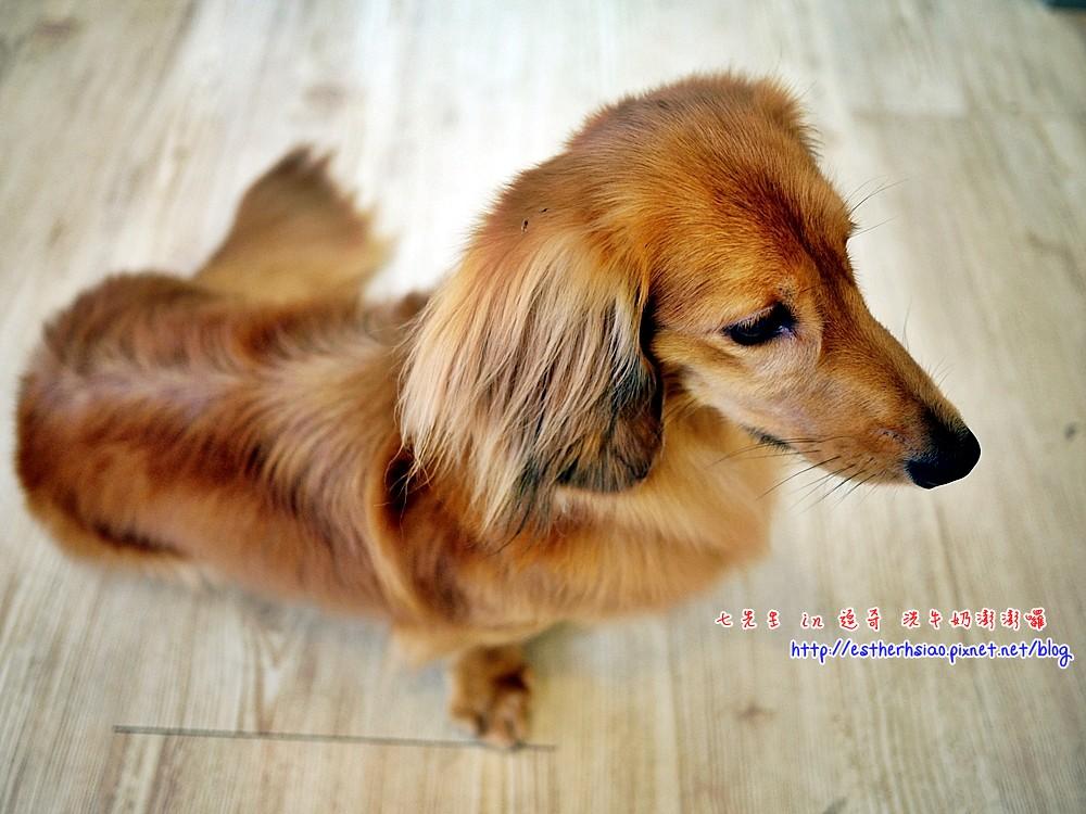 12 優雅的犬犬