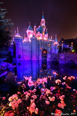 Pink Ladies... (Ring of Fire Hot Sauce 1) Tags: pink roses night disneyland hdr sleepingbeautycastle photomatix canont1i
