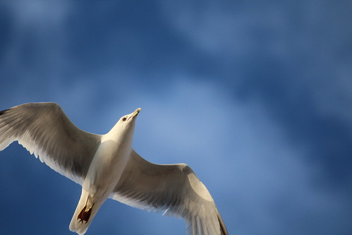 Jonathan Livingston Seagull Returns