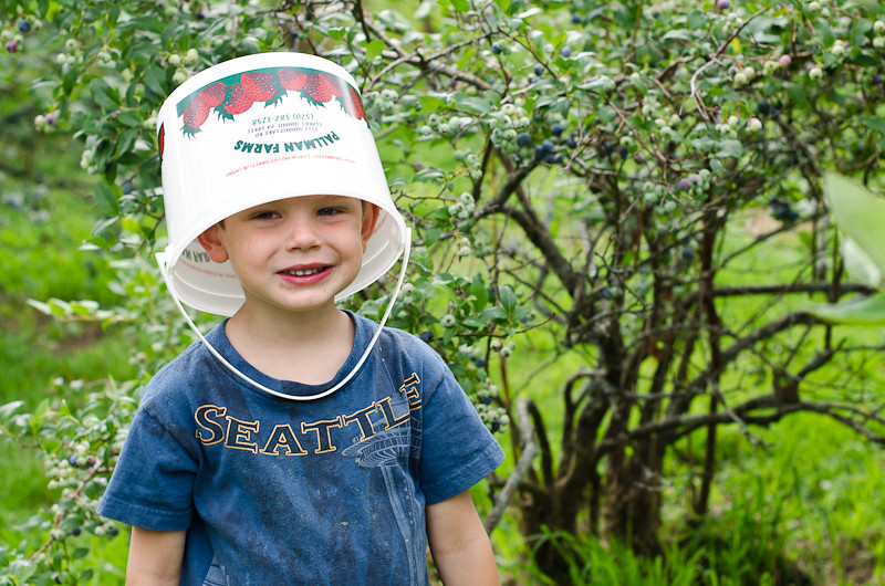Blueberry Picking Pt 116